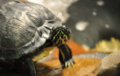 Q & A with Chad, TDHS Celebrity Turtle